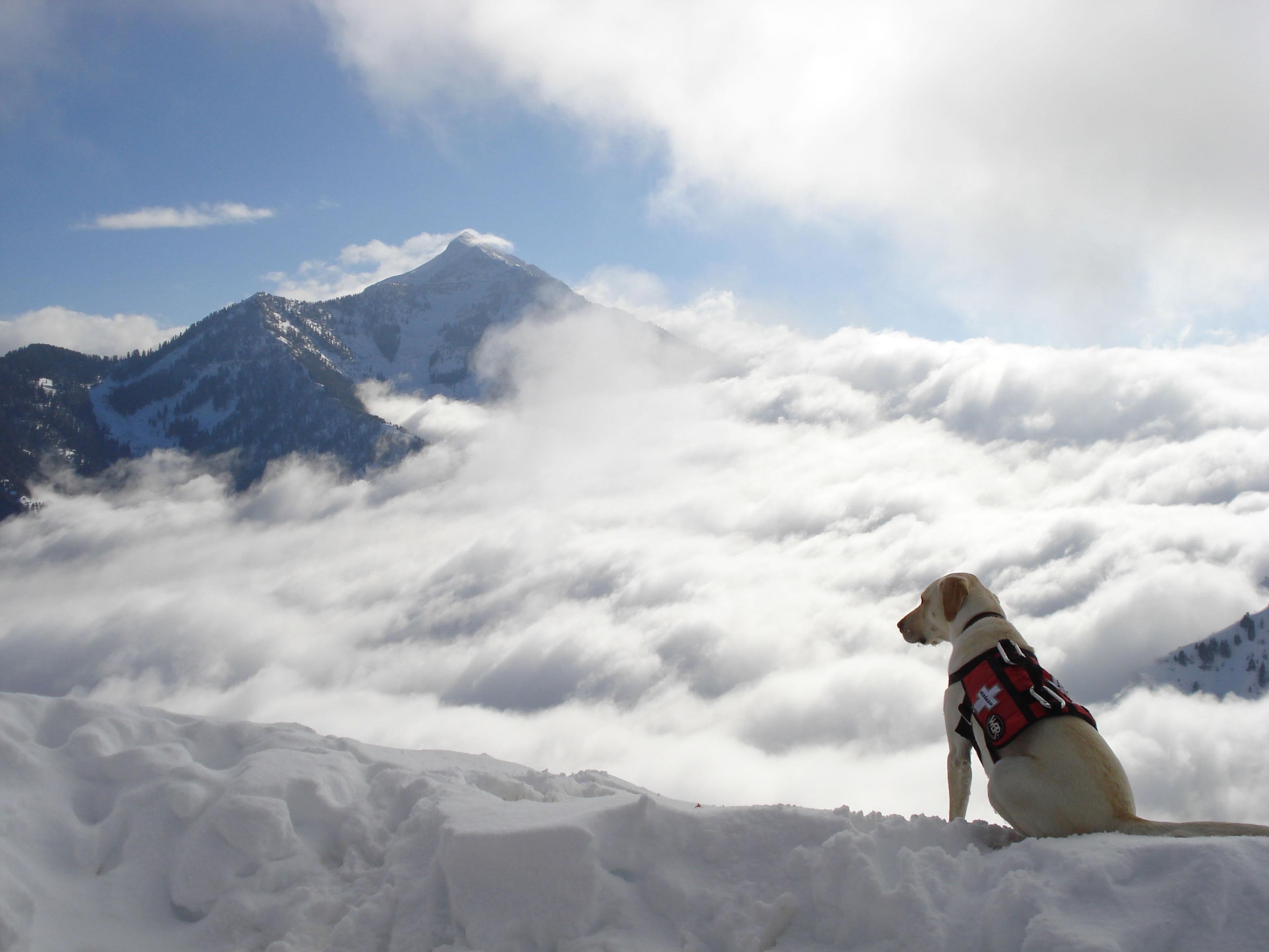 Home  Home Dog Rescue